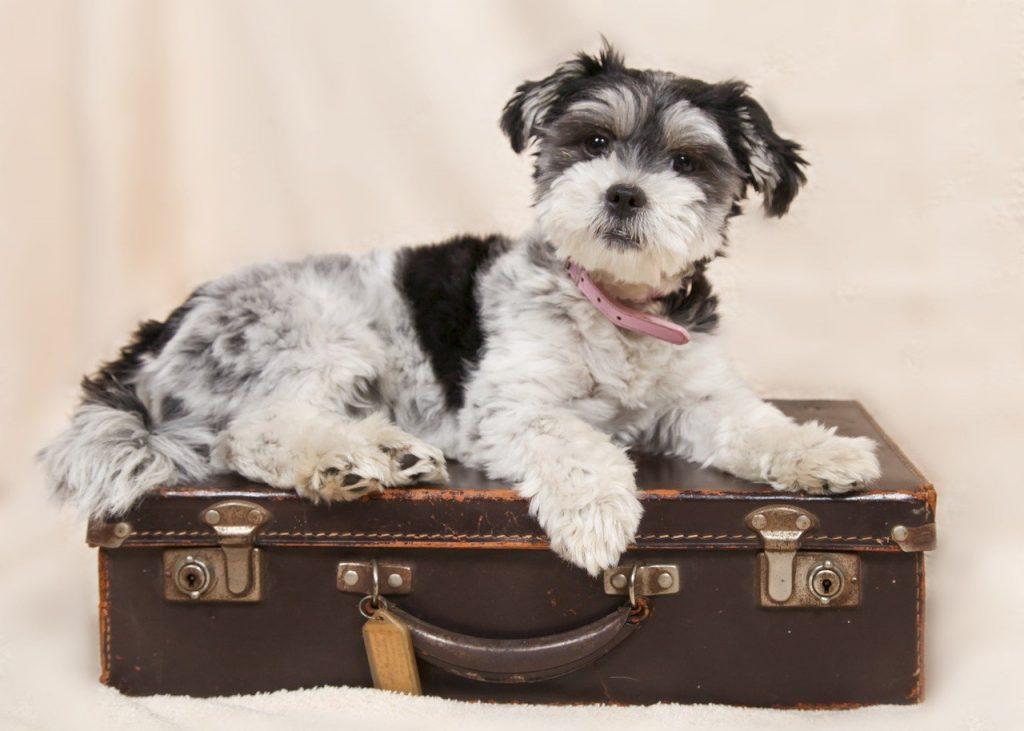 viajar con mascotas a eeuu